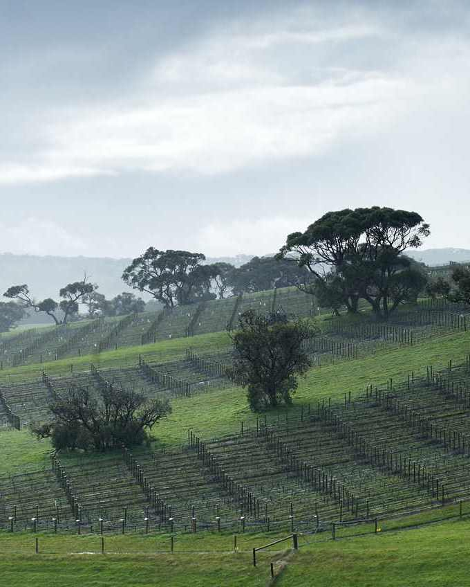 Foggy Hill Vineyard